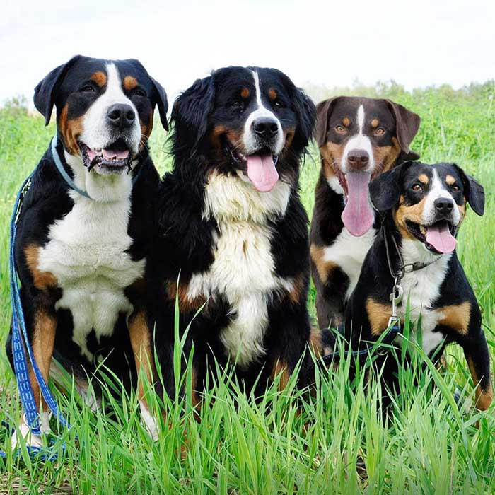 Bio Dog - همه چیز در مورد سگها