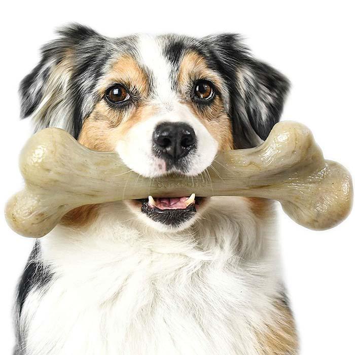Bone Dog - فواید و مضرات استخوان برای سگ ها
