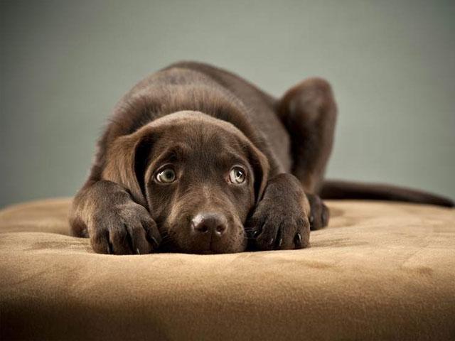 اسهال در سگ های بالغ و توله سگ ها